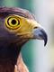 02545 eaglesstare 1920x1080