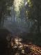 02546 forestforthetrees 1920x1080