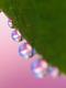 02611 dewyflower 1920x1080