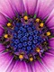 01359 flower29 1920x1080