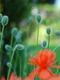 01404 garden 1920x1080