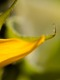 01449 sunflower 1920x1080