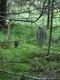 01538 metsaforest 1920x1080