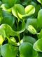 01568 greenparadise 1920x1080