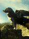 01611 withusflyingdog 1920x1080