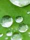 01220 leaf41 1920x1080