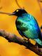 01739 bluebird 1920x1080