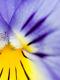 01235 flower24 1920x1080