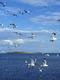 01240 seagulls 1920x1080