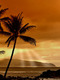 01801 sunsetinthetropics 1920x1080