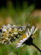 01241 summerbutterfly 1920x1080