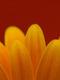 01829 simplecolors 1920x1080