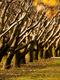 01907 autumntrees 1920x1080