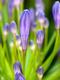 01915 likethisflowers 1920x1080