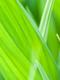 01264 leaf40 1920x1080