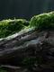 02097 moss 1920x1080