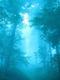 02105 blueforest 1920x1080