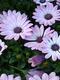 01293 purpleflowers 1920x1080