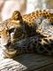02211 lazingleopard 1920x1080