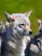 02240 3brotherwolves 1920x1080