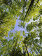 02243 treetopsmichauxstateforest 1920x1080